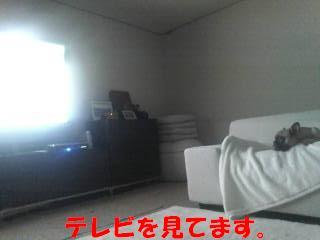 20081111031657