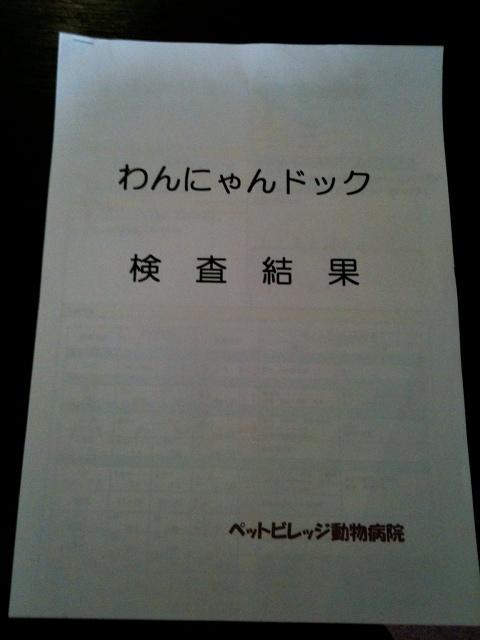 Hachi1